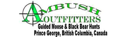 Guided Moose And Black Bear Hunts
