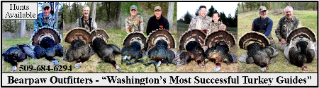Experience A Successful Turkey Hunt With Bearpaw Outfitters